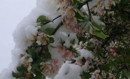 ivanjica, sneg