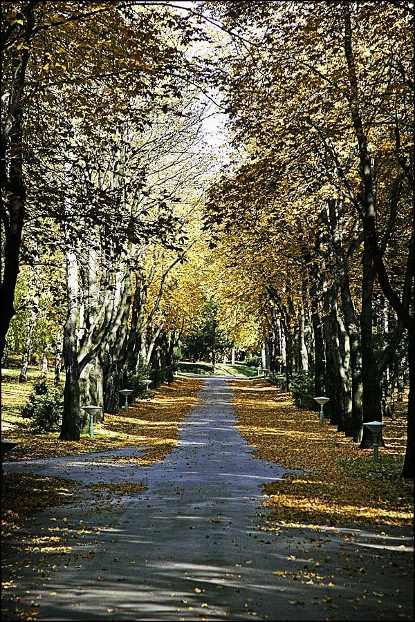 jesen-5
