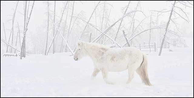 winter_05a