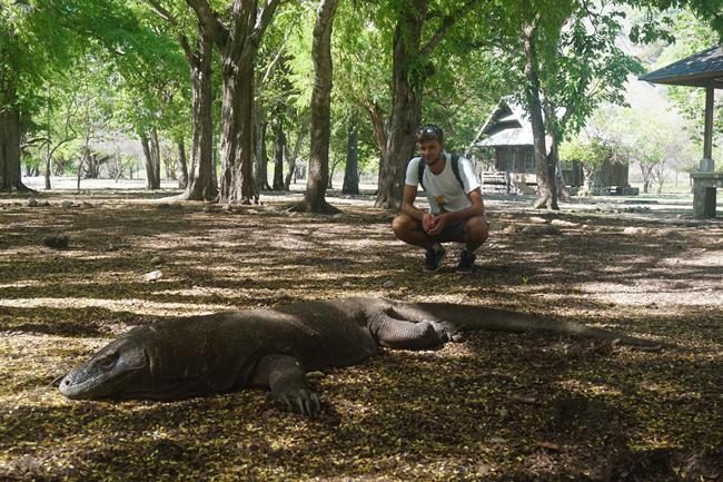 Komodo zmaj