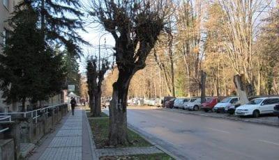 drvece2
