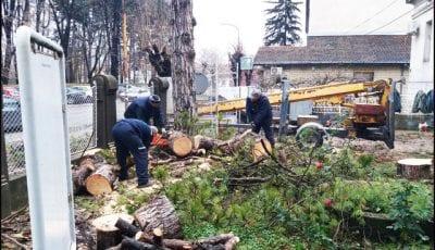 drvoseče-1a