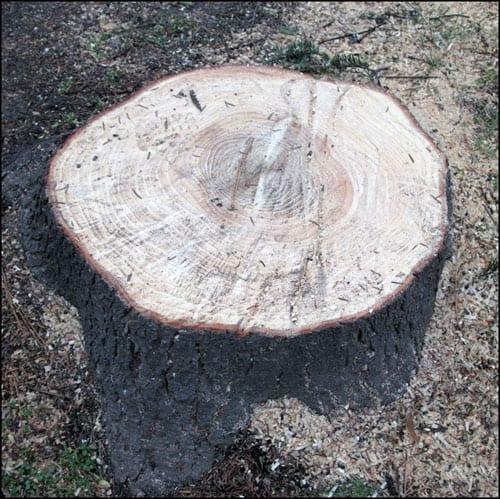 drvoseče-1s