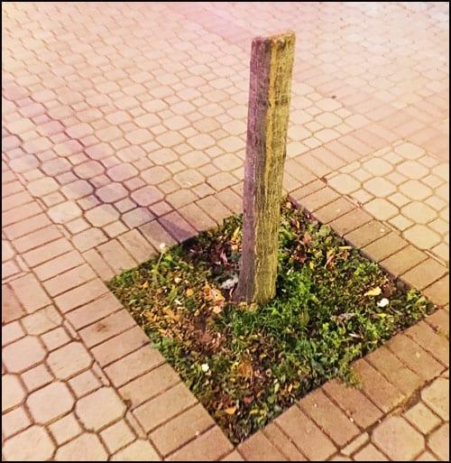 drvored-4