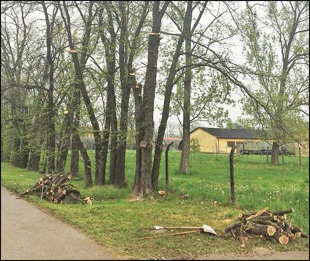 drvoseče-8