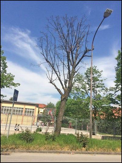 drvoseče-r1