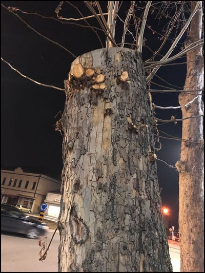 drvo-1